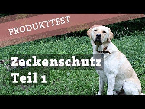 Zeckenschutz Zeckenmittel Hund - TEST dm Zeckenhalsband - Hund Zecke Zecken