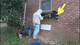 Man Removing Bricks Discovers A Huge Hidden Surprise Behind Them