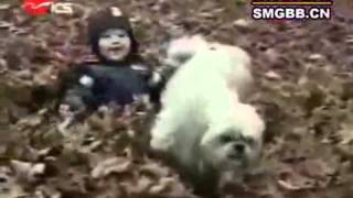The worlds most funny dog video www Keep Tube com