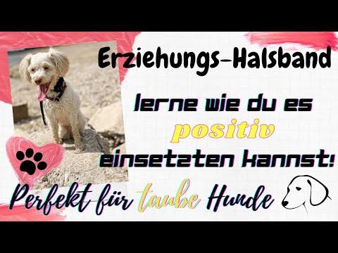 Erziehungshalsband; Rückruf positiv aufbauen! besonders gut für taube Hunde geeignet!