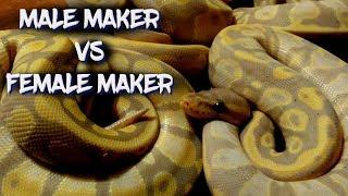 Male Maker Vs. Female Maker