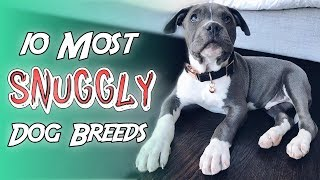 10 Most Snuggly Dog Breeds