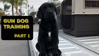 Training my DUCK Dog | Pt. 1