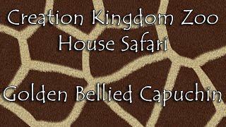 Creation Kingdom Zoo - House Safari 01 - Golden Bellied Capuchin