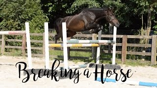 Breaking a Horse // day by day