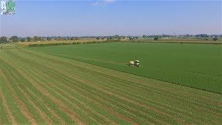 Krone Big M 420 -  Sfalcio erba medica 2018 - Mowing grass