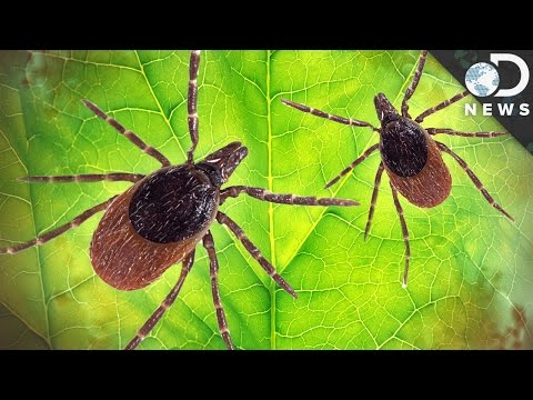 Video How Dangerous Is Lyme Disease?