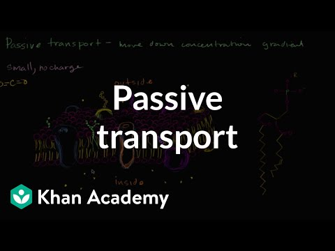 Passive transport and selective permeability (video) Khan Academy
