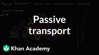 Passive transport and selective permeability | Biology | Khan Academy