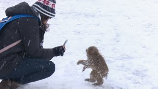 【SNOW MONKEY】ニホンザル / 地獄谷野猿公苑 ☆Cute Baby☆ First Snow Life 6