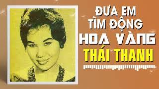 THÁI THANH - ĐƯA EM TÌM ĐỘNG HOA VÀNG (PHẠM DUY)