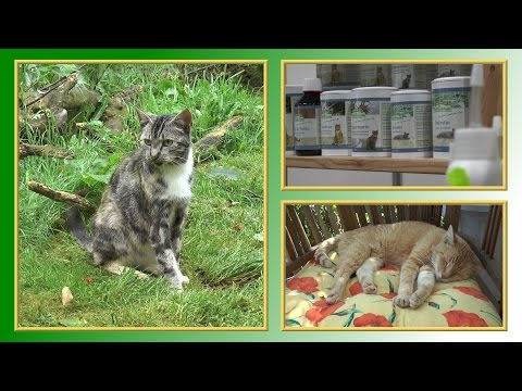 Barfen bei Katzen   TierheimTV informiert