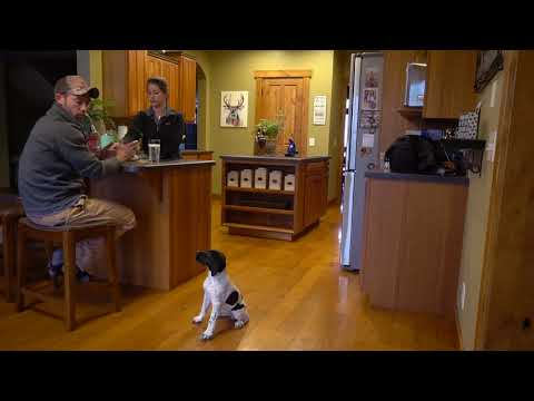How To Train Your Puppy House Manners in the Kitchen  - Upland Bird Dog Training