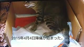 [閲覧注意]  猫の出産シーンです。No.1