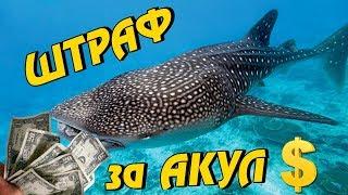 Китовые АКУЛЫ на Филиппинах: поплавал – $ плати штраф! Остров Себу, Ослоб. Philippines #12