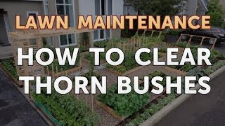 How to Clear Thorn Bushes