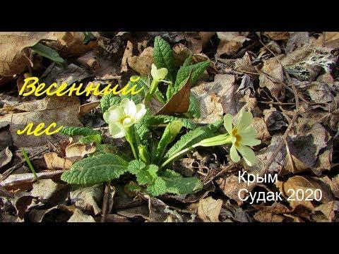 Весенний лес, какой он в Крыму. Моя ботаническая прогулка 18 марта 2020