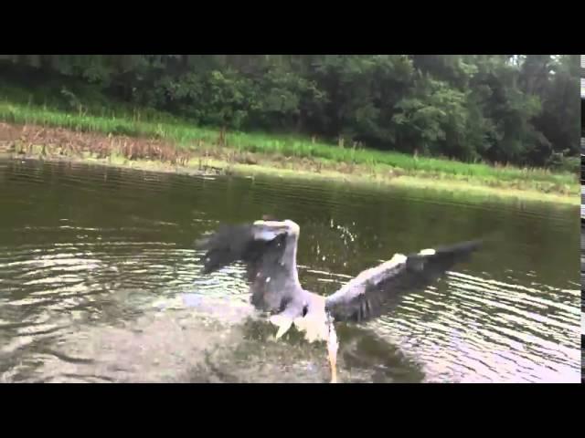 صياد يحرر طائرا علق في شبكة صيد الأسماك