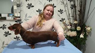 Stacking your dachshund (4 steps)