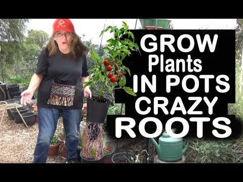 How to Grow a CONTAINER Garden, CHEAP and EASY Patio Gardening