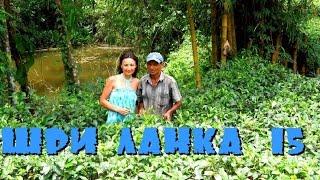 Шри-Ланка 15: Каучуковая роща, чайная плантация, паром через реку