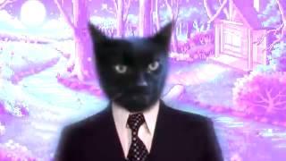 Поющий кот(прикол)