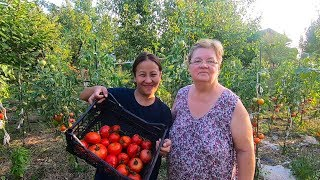 OUR RICH SERBIAN TOMATO HARVEST+SURPRISING HIS PARENTS AT THE FARM