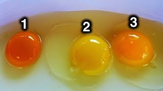 Which Egg Do You Think Came From Healthy Chicken?
