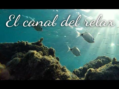 MUSICA RELAJANTE CON IMAGENES DEL FONDO MARINO 3, RELAXING MUSIC WITH SEA IMAGES 3. 🎧