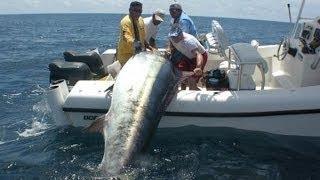 Огромный тунец на бамбуковую палку