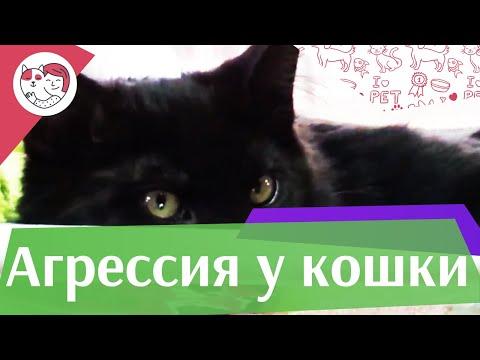 Причины агрессии кошек на ilikepet