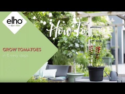 elho green basics Tomatentopf