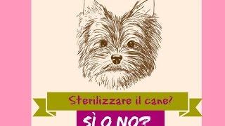 Sterilizzare il cane, sì o no? Pro & contro della sterilizzazione del cane
