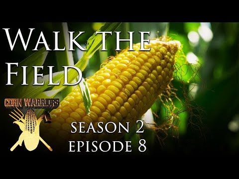 Corn Warriors - 208 - Walk The Field