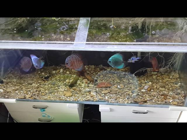 Tank Time - Discus Tank Substrate Emergency Replacement