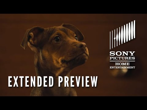 Video trailer för A DOG'S WAY HOME: Extended Preview - Now on Digital! On Blu-ray 4/9
