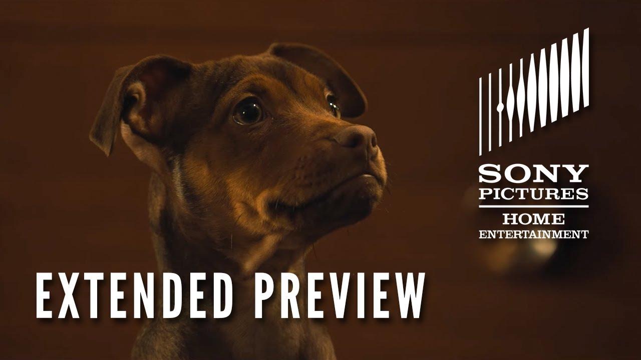 Trailer för A Dog's Way Home