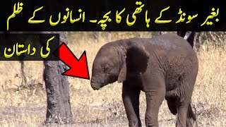 Reality Behind The Elephant Without Trunk