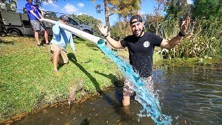 Delivering 100,000+ SHINERS To My POND!! (goal completed)