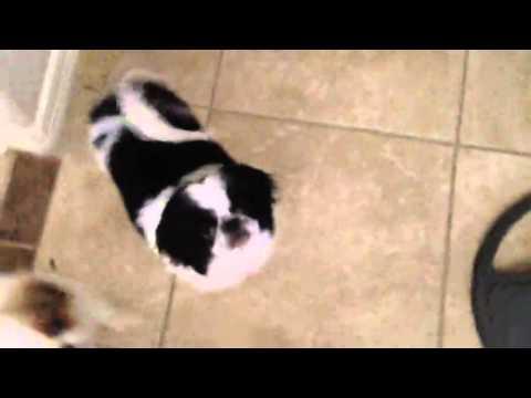 John McFerrin's dog Arrow