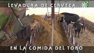 PGM 491 Los Toros Comen LEVADURA DE CERVEZA