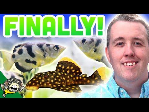 ADDING NEW FISH IN THE 800 GALLON AQUARIUM