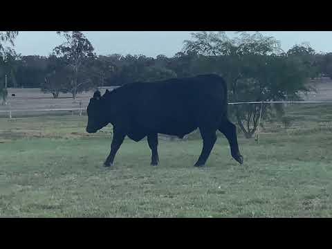 MORDALLUP BLACK ONYX R78