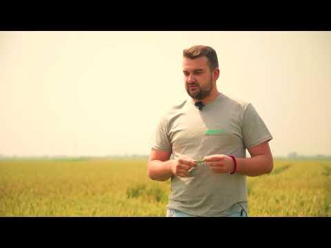 AD Jedinstvo – sorta ozime pšenice Sosthene