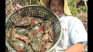 小池把堂哥虾塘的水抽干后,大青蟹抓到几十只,这才是真正爆桶了