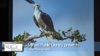 Milford Town Library presents: Bird Photography