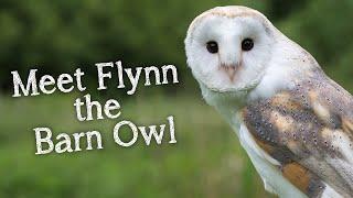 Meet The Birds | Introducing Flynn The Barn Owl