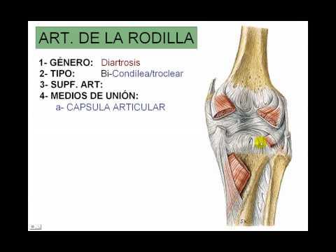 Recuperación de la temporización después de la cirugía de rodilla