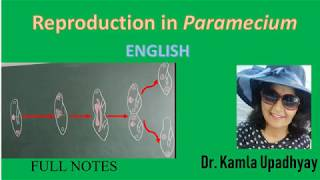 Reproduction in Paramecium caudatum |Transverse binary fission | Endomixis, Conjugation |B.Sc & M.Sc