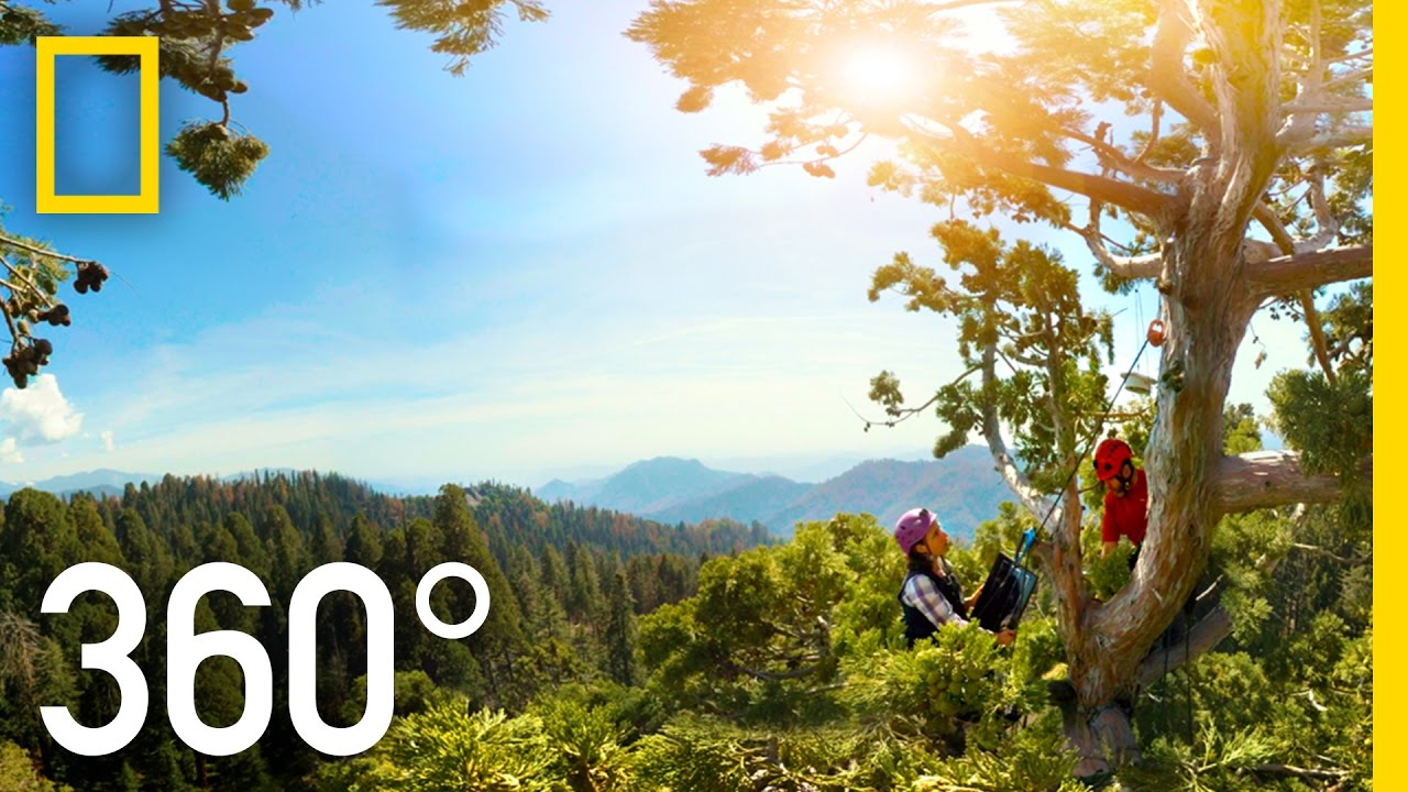 360° Giant Sequoias on a Changing Planet – Part 2   National Geographic thumbnail